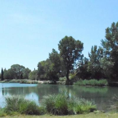 1 juin 2014 Lac de Vallabrègues